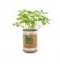 Micro jardín - Plantas enlatadas