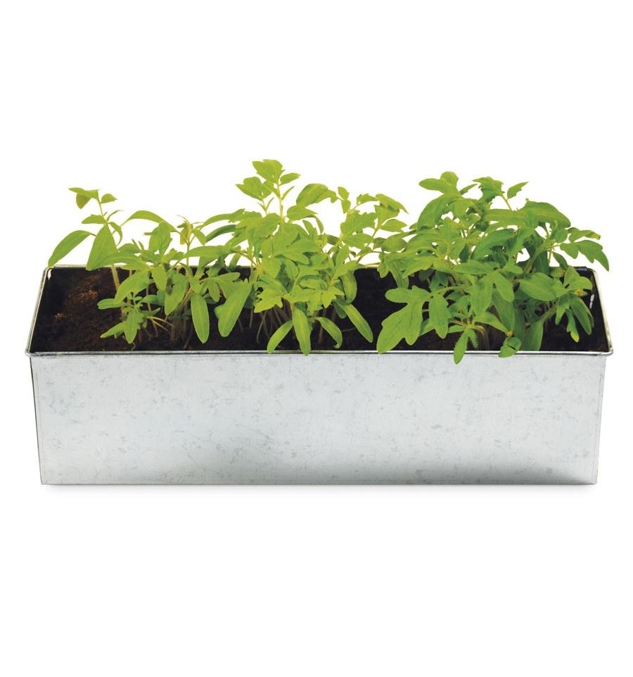 Jardinera plantas para cocinar