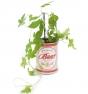 Planta de cerveza enlatada