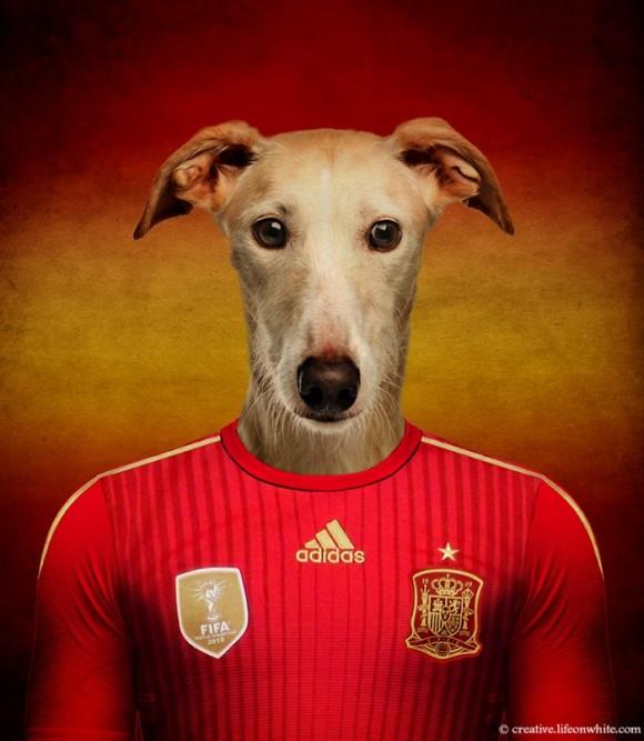 Perros fútbol