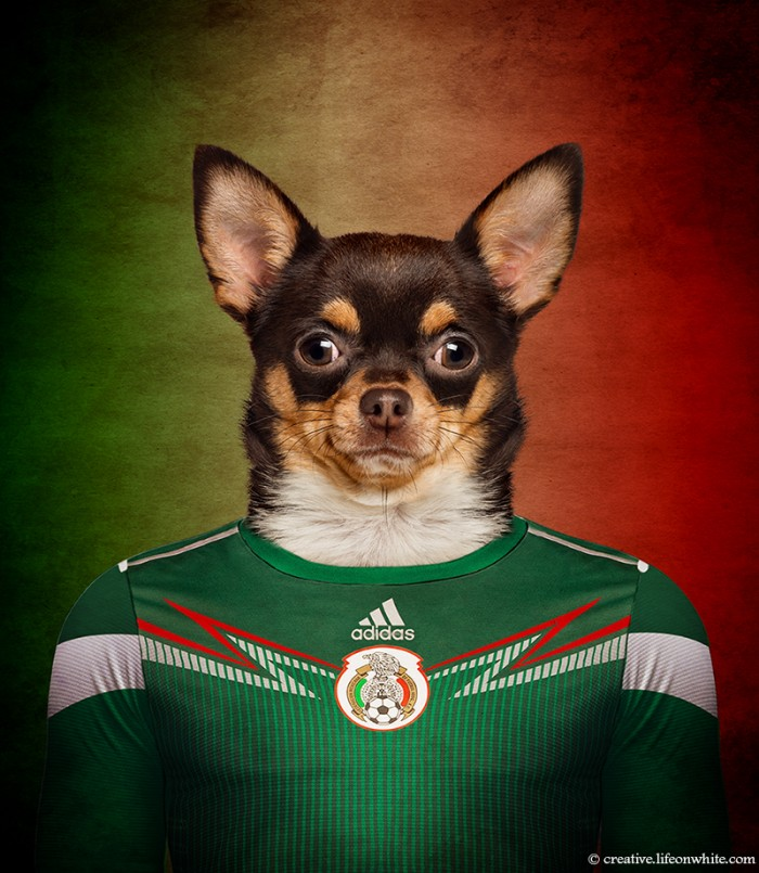 Perros y fútbol